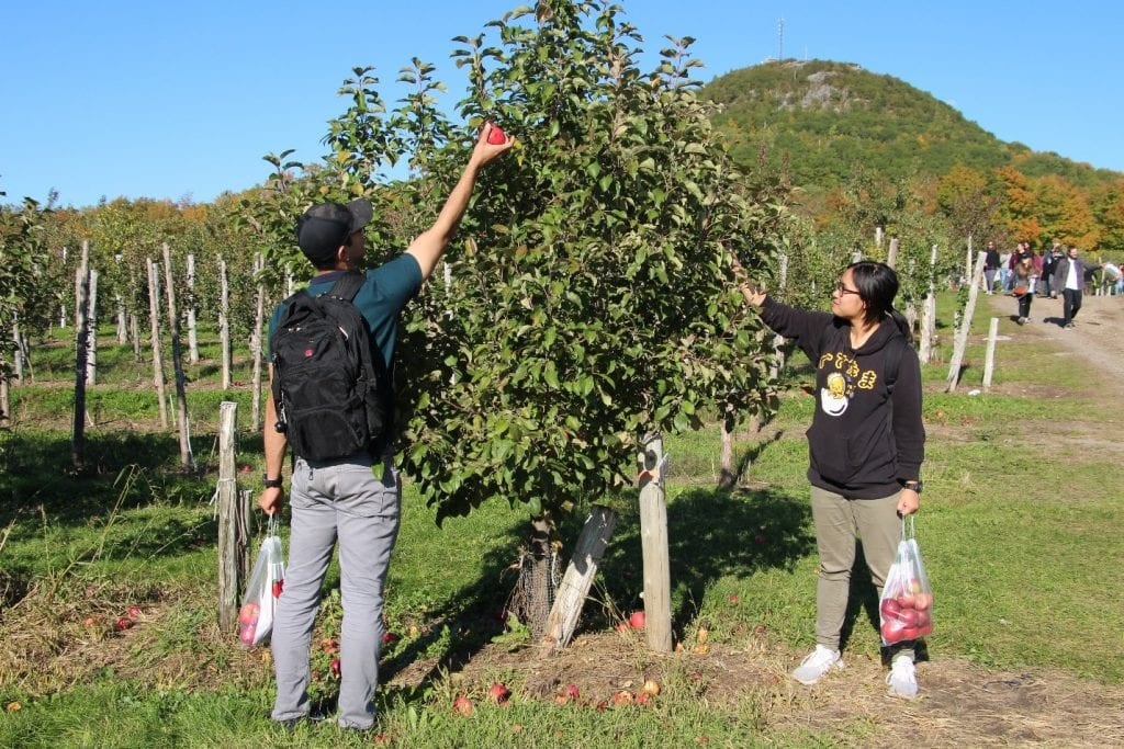RMC Saint-Jean Apple Picking